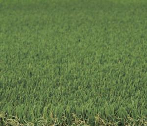 クオリティターフ20_2×5、2×10刈り込んだ芝を表現